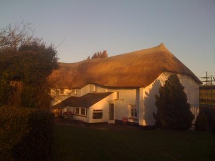 Kentisbeare re-thatch looking lovely in the low winter sun